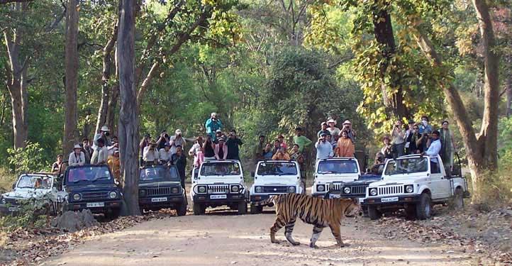 wild-jeep-safari